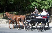 Falunéző lovaskocsikázás a Mecsekben