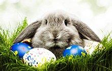 Húsvéti akció